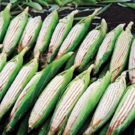 Cómo el sector agropecuario puede sumar esfuerzos para la mitigación al cambio climático en el contexto REDD+.pdf